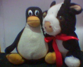 Seagull the Penguin and Beef the Cow